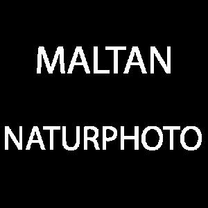 Maltan NaturPhoto